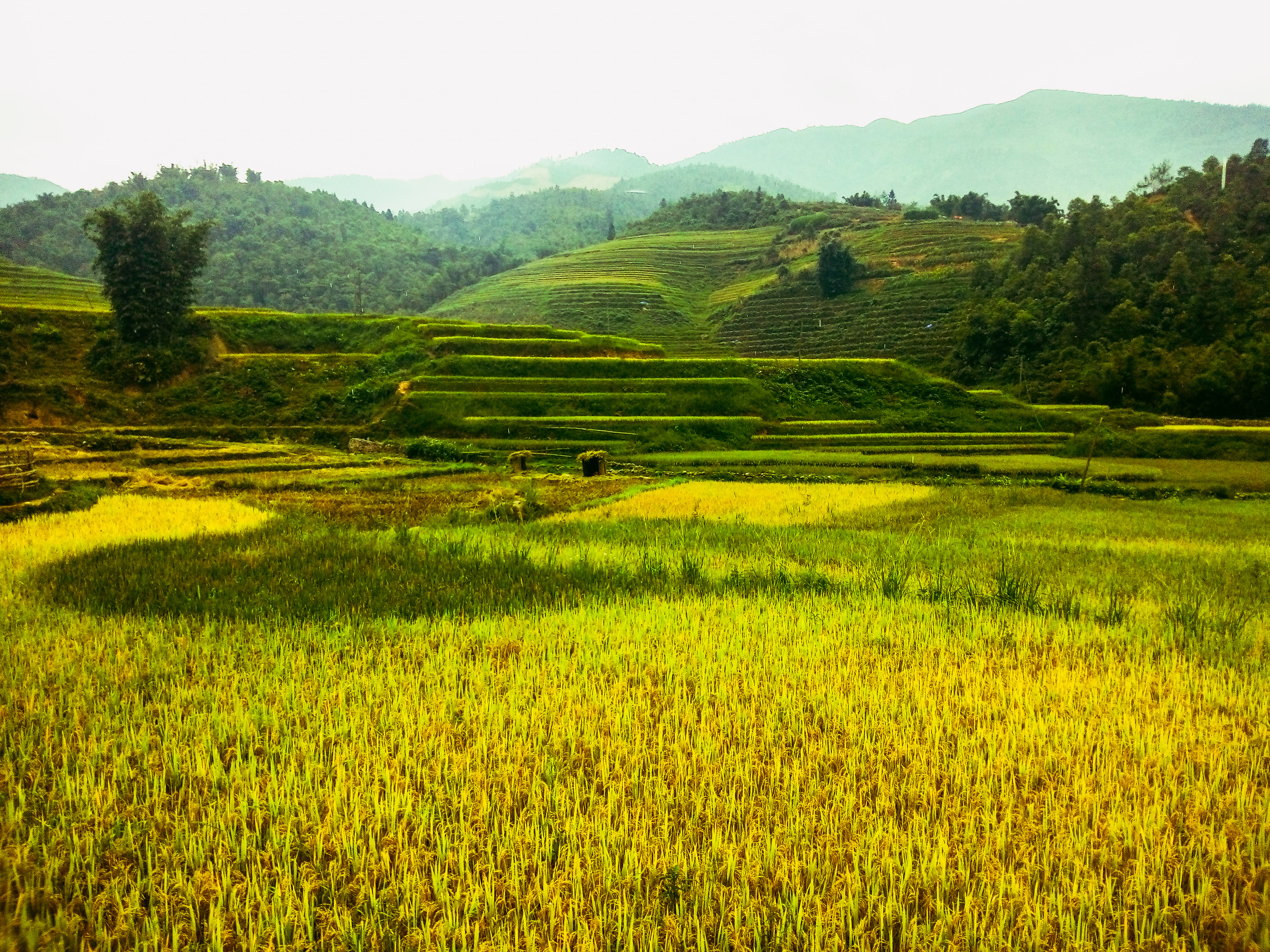 risaie a terrazze Sapa Vietnam