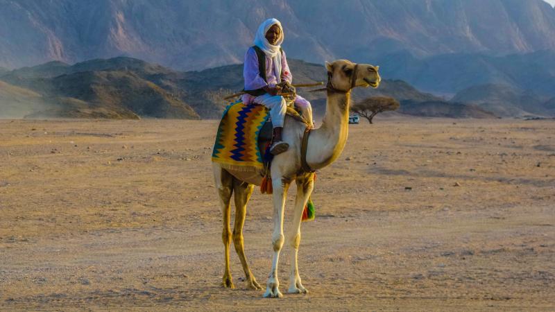 Deserto_di_Marsa_Alam_Beduino_su_cammello