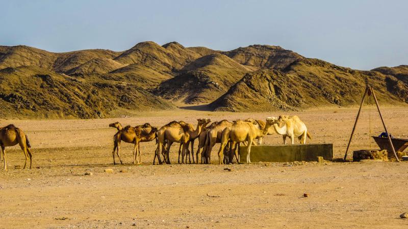 Deserto_di_Marsa_Alam_pozzo_D'acqua