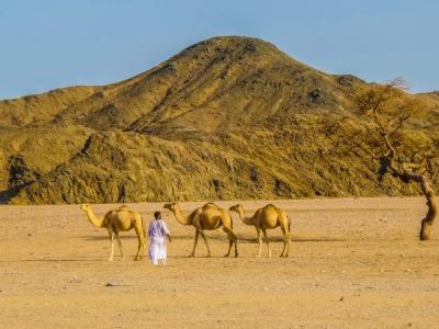 Deserto_di_Marsa_Alam_Cammelli