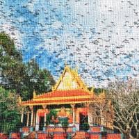 Delta del Mekong e la pagoda dei pipistrelli
