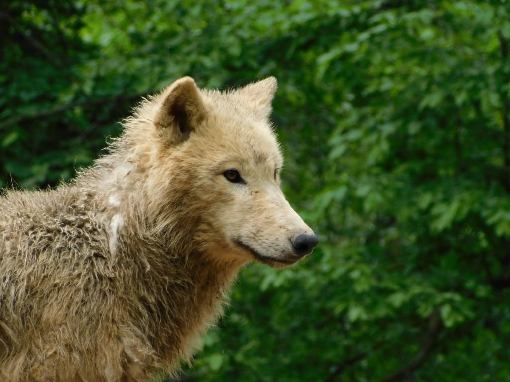 16 maggio un giorno allo zoo di Brno
